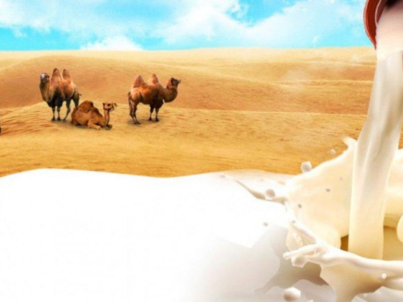 Ученые обнаружили новый «суперфуд» против воспалений – верблюжье молоко