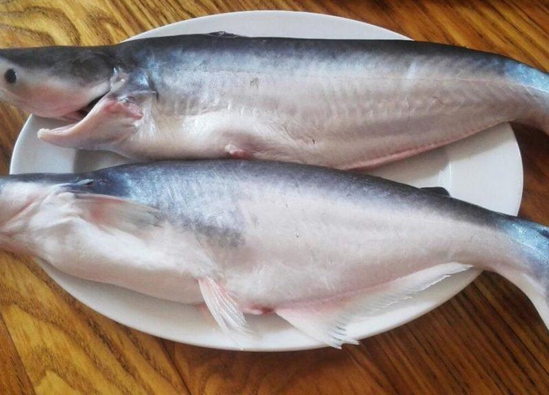 Названа популярная рыба, употребление которой вредно для здоровья