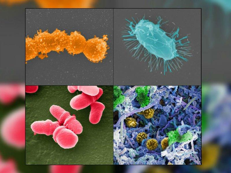 Исследование: пересадка кала оздоравливает кишечный микробиом