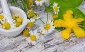7 растений, тормозящих секрецию желудочного сока при гастрите
