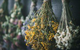 Гастрит: лучшие лекарственные травы