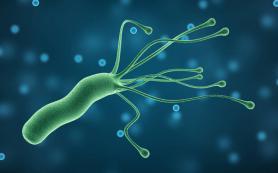 Комбинация трех препаратов эффективно уничтожает Helicobacter pylori, которая ответственна за гастрит и рак желудка