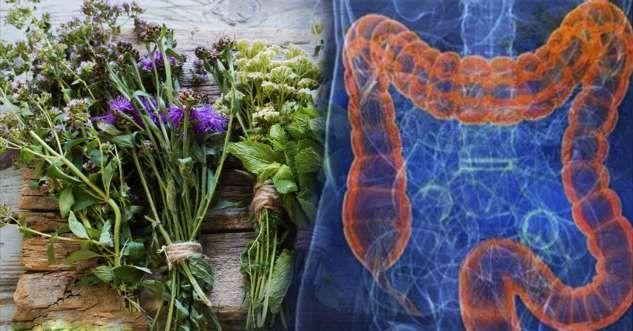 Травяные средства для улучшения здоровья кишечника