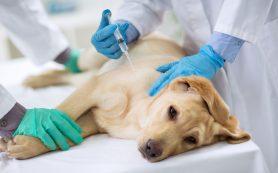 Услуги городской ветеринарной клиники