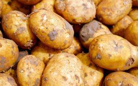 Картофельный сок при гастрите: польза и вред для желудка