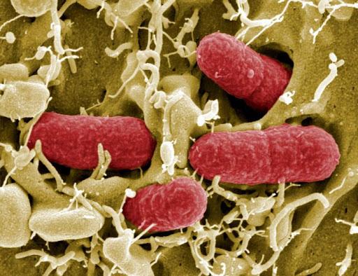 Как преодолеть витаминную недостаточность при дисбактериозе
