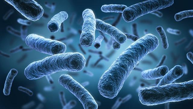 Как сбалансировать кишечную микрофлору и усилить иммунный ответ?