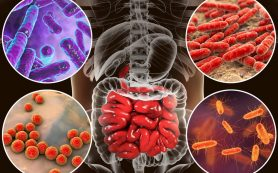 Микрофлора кишечника напрямую влияет на тяжесть течения COVID-19