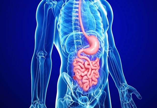 Здоровье желчного пузыря: как не навредить этому важному органу