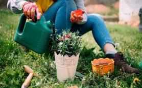 Как садоводство спасает психику и помогает кишечнику?