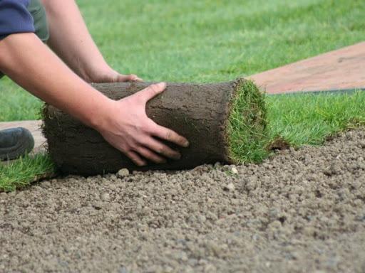 Так ли прост рулонный газон?