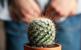 Лекарственные растения при геморрое: 9 лучших рецептов