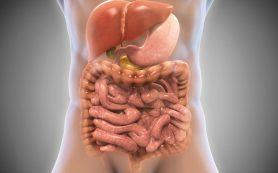 Изменения микробиоты кишечника влияет на лечение заболеваний печени и риск рака