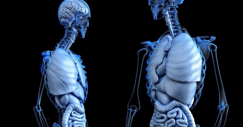 4 правила как вылечить кишечник естественным путем