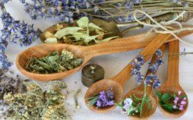 6 трав для улучшения здоровья поджелудочной