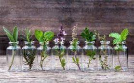 Незаменимая трава при усталости и заболеваниях органов пищеварения
