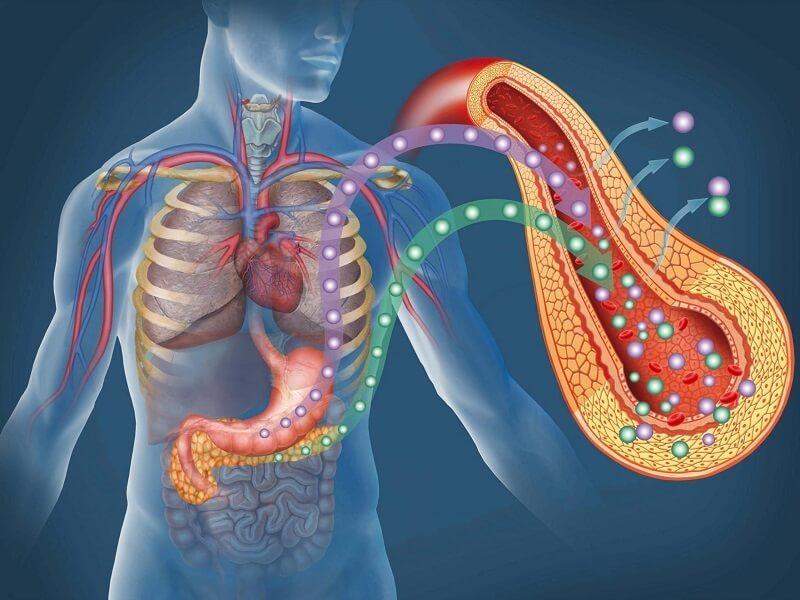 Поджелудочная пополнит ресурс клеток, вырабатывающих инсулин