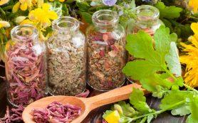 Сборы при гастритах и повышенной кислотности: 8 действенных рецептов
